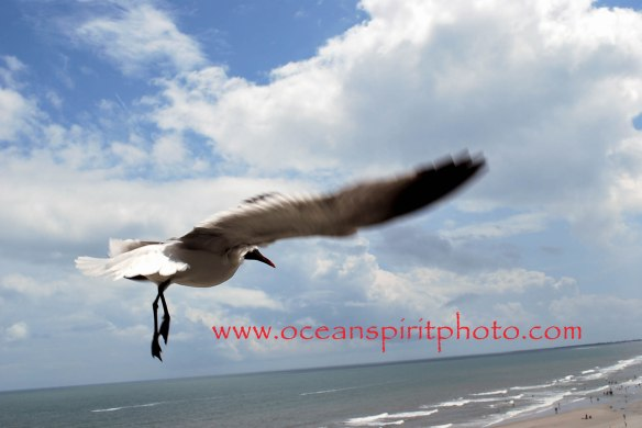 Cover photo - Seagul close up Folly Beach revised logo
