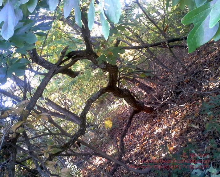 20151013_085130 knarled tree trunk crop copry