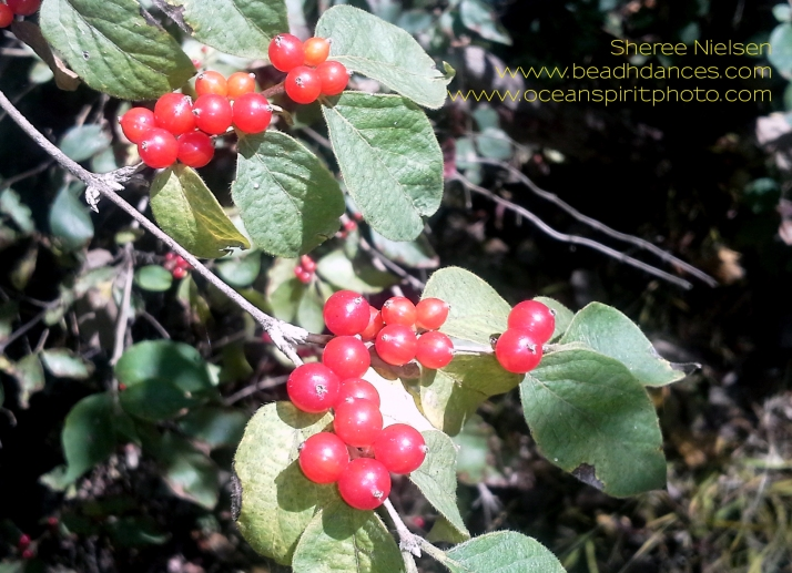 20151013_085315 berries crop copyr